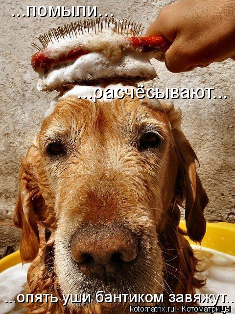 Котоматрица: ...помыли... ...расчёсывают... ...опять уши бантиком завяжут...