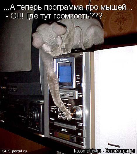 Котоматрица: ...А теперь программа про мышей... - О!!! Где тут громкость???