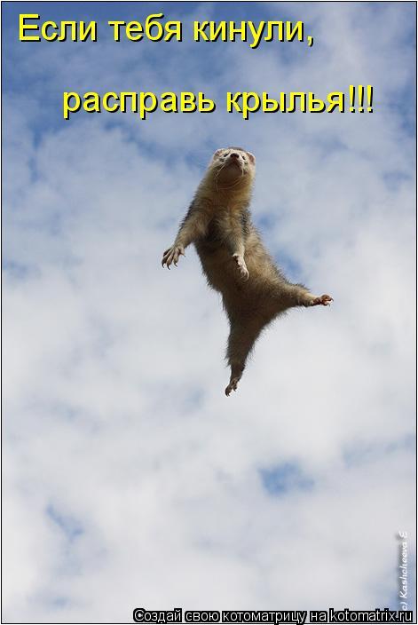 Котоматрица: Если тебя кинули, расправь крылья!!!