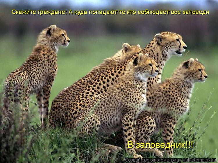 Котоматрица: Скажите граждане: А куда попадают те кто соблюдает все заповеди В заповедник!!!