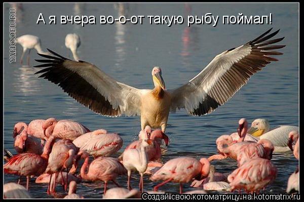 Котоматрица: А я вчера во-о-от такую рыбу поймал!