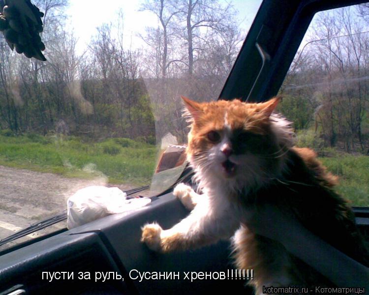 Котоматрица: пусти за руль, Сусанин хренов!!!!!!!