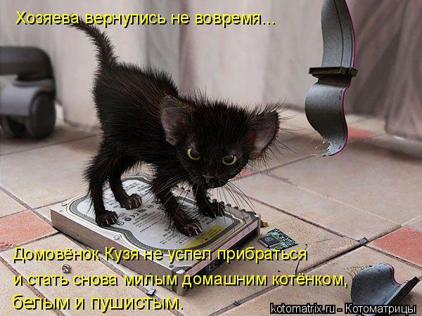 Котоматрица: Хозяева вернулись не вовремя... Домовёнок Кузя не успел прибраться  и стать снова милым домашним котёнком, белым и пушистым.