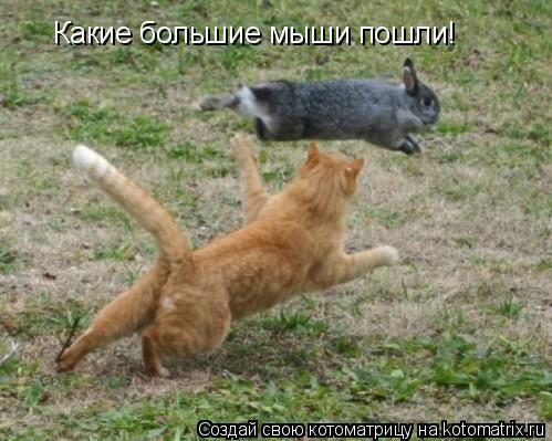 Котоматрица: Какие большие мыши пошли!