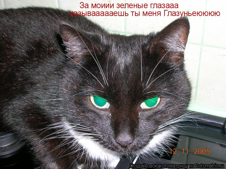 Котоматрица: За моиии зеленые глазааа называааааешь ты меня Глазуньеюююю