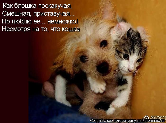 Котоматрица: Как блошка поскакучая, Смешная, приставучая... Но люблю ее... немножко! Несмотря на то, что кошка