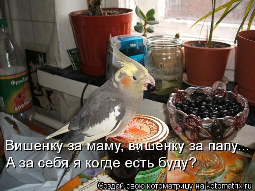 Котоматрица: Вишенку за маму, вишенку за папу... А за себя я когде есть буду?