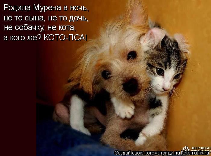 Котоматрица: Родила Мурена в ночь,  не то сына, не то дочь, не собачку, не кота,  а кого же? КОТО-ПСА!