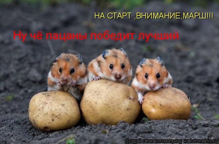 Котоматрица: Ну чё пацаны победит лучший НА СТАРТ ,ВНИМАНИЕ,МАРШ!!!