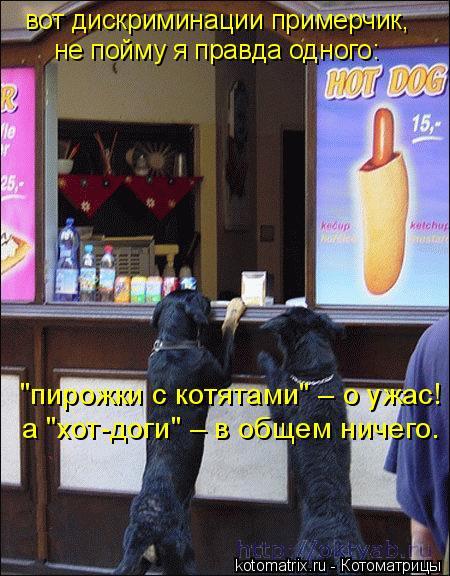 """Котоматрица: вот дискриминации примерчик, не пойму я правда одного: """"пирожки с котятами"""" – о ужас! а """"хот-доги"""" – в общем ничего."""