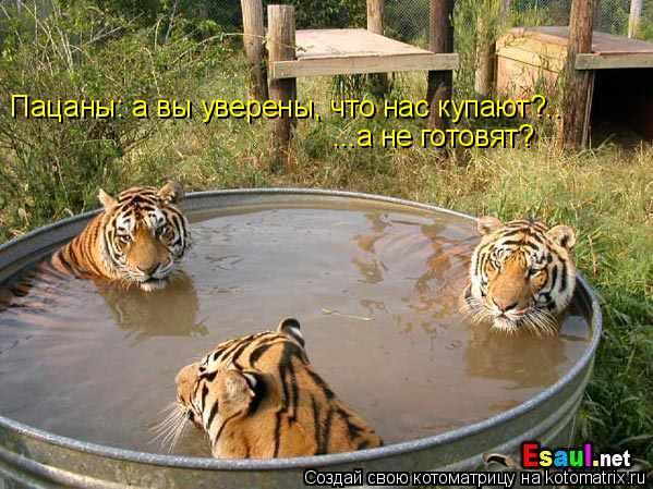 Котоматрица: Пацаны: а вы уверены, что нас купают?.. ...а не готовят?