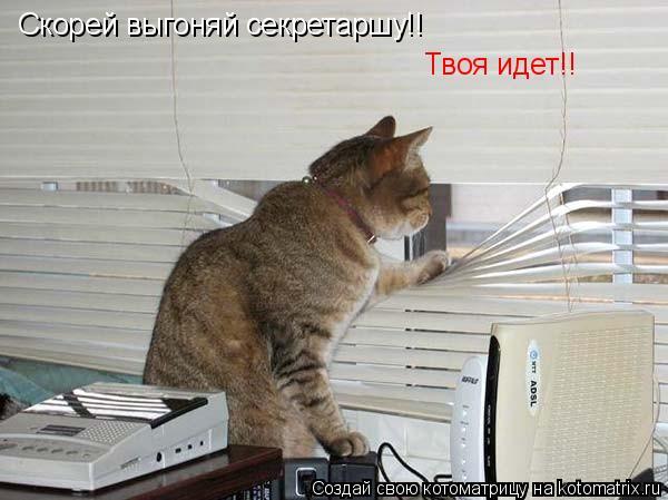 Котоматрица: Скорей выгоняй секретаршу!! Твоя идет!!