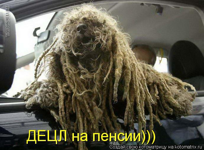Котоматрица: ДЕЦЛ на пенсии)))