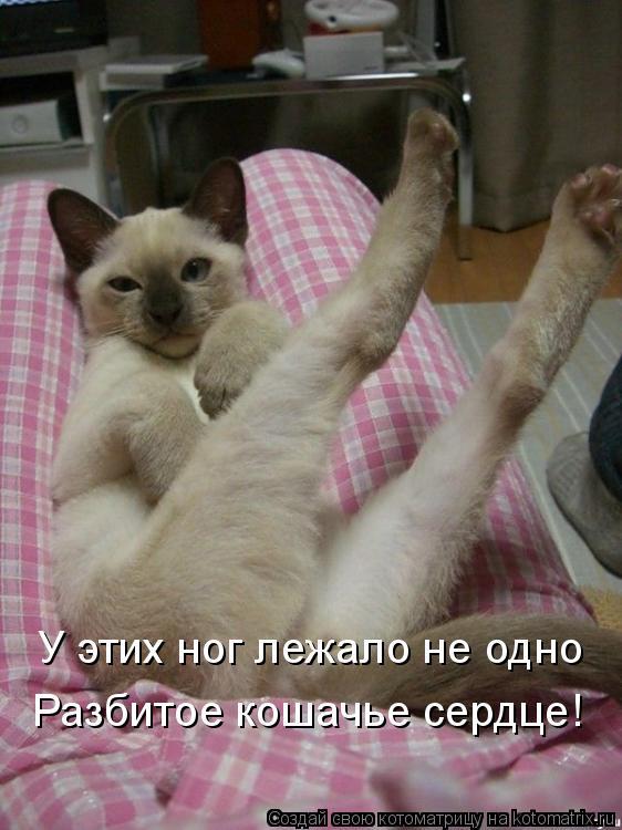 Котоматрица: У этих ног лежало не одно Разбитое кошачье сердце!