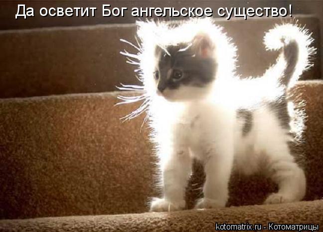 Котоматрица: Да осветит Бог ангельское существо!
