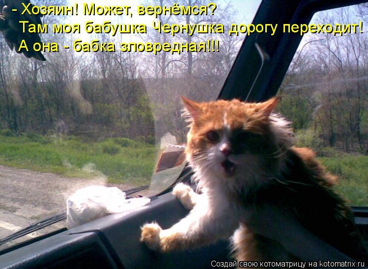 Котоматрица: - Хозяин! Может, вернёмся? Там моя бабушка Чернушка дорогу переходит! А она - бабка зловредная!!!