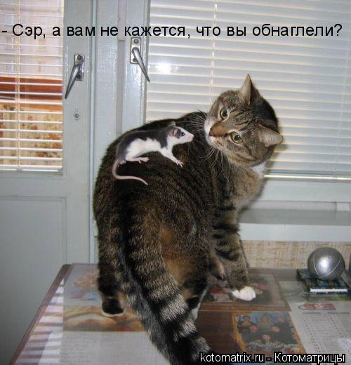 Котоматрица: - Сэр, а вам не кажется, что вы обнаглели?