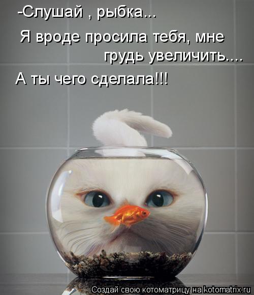 Котоматрица: -Слушай , рыбка...  грудь увеличить.... Я вроде просила тебя, мне А ты чего сделала!!!