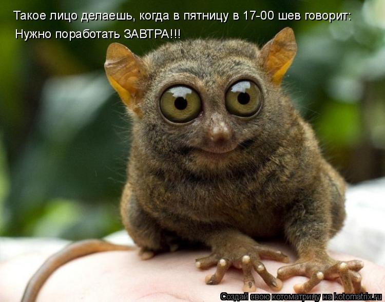 Котоматрица: Такое лицо делаешь, когда в пятницу в 17-00 шев говорит: Нужно поработать ЗАВТРА!!!