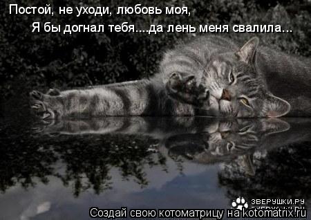 Котоматрица: Постой, не уходи, любовь моя, Я бы догнал тебя....да лень меня свалила...