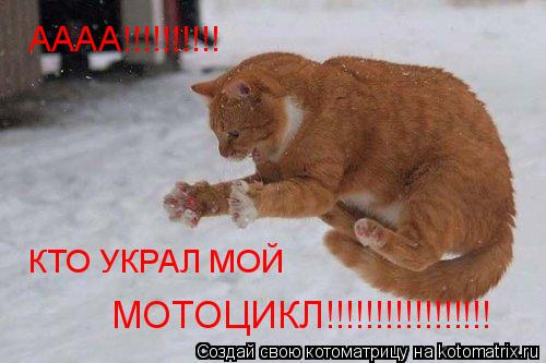 Котоматрица: АААА!!!!!!!!!! КТО УКРАЛ МОЙ МОТОЦИКЛ!!!!!!!!!!!!!!!!!