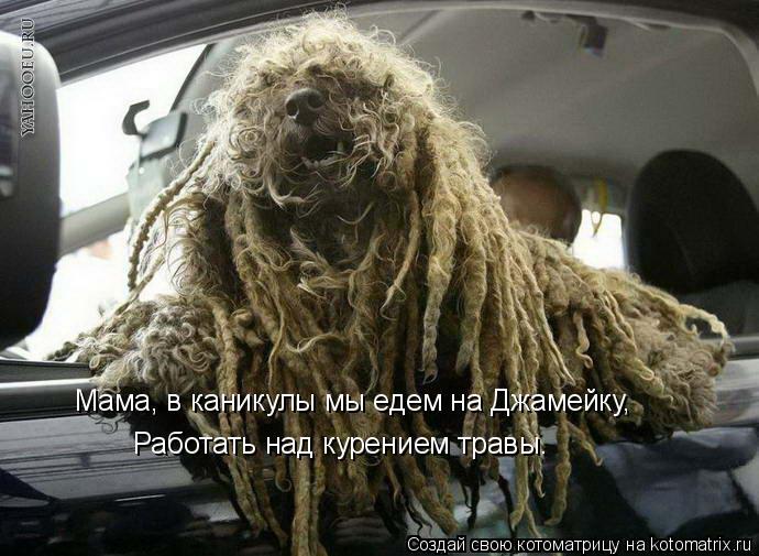 Котоматрица: Мама, в каникулы мы едем на Джамейку, Работать над курением травы.