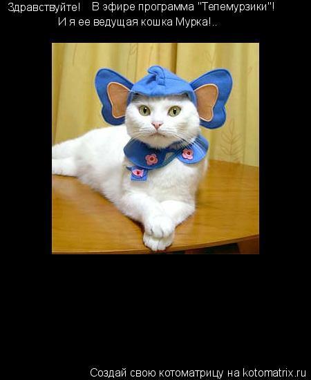 """Котоматрица: Здравствуйте! В эфире программа """"Телемурзики""""! И я ее ведущая кошка Мурка!.."""