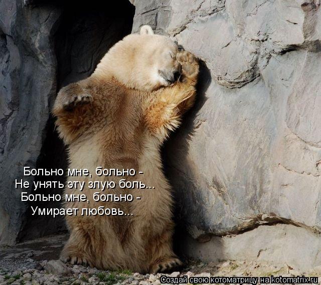 Котоматрица: Больно мне, больно -  Не унять эту злую боль... Больно мне, больно -  Умирает любовь...