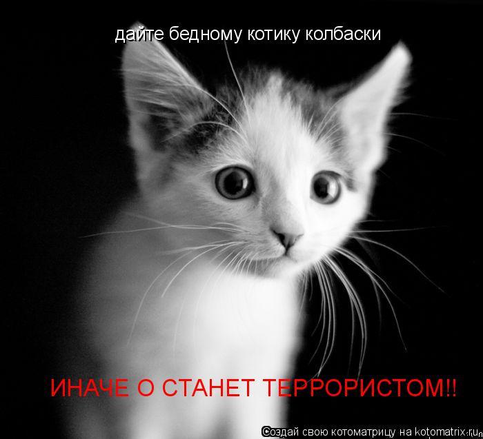 Котоматрица: дайте бедному котику колбаски ИНАЧЕ О СТАНЕТ ТЕРРОРИСТОМ!!