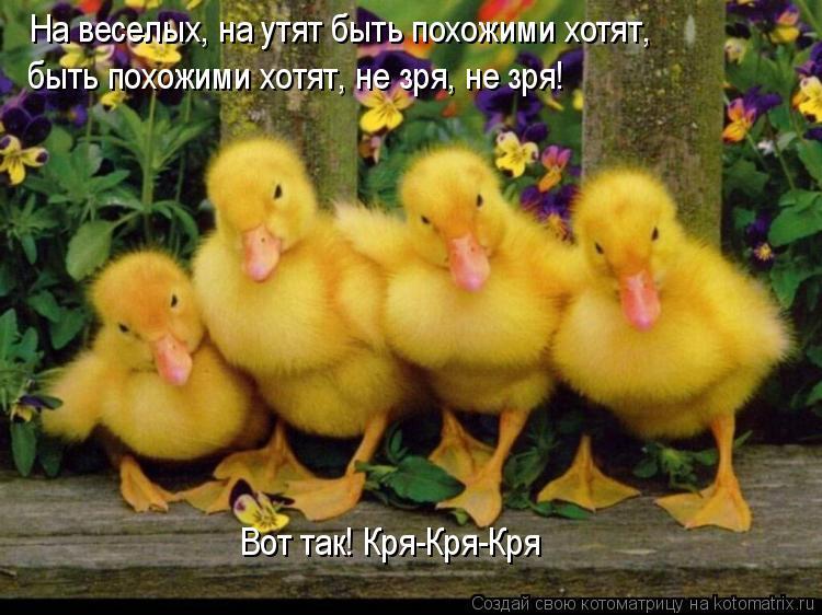 Котоматрица: На веселых, на утят быть похожими хотят,  быть похожими хотят, не зря, не зря!  Вот так! Кря-Кря-Кря