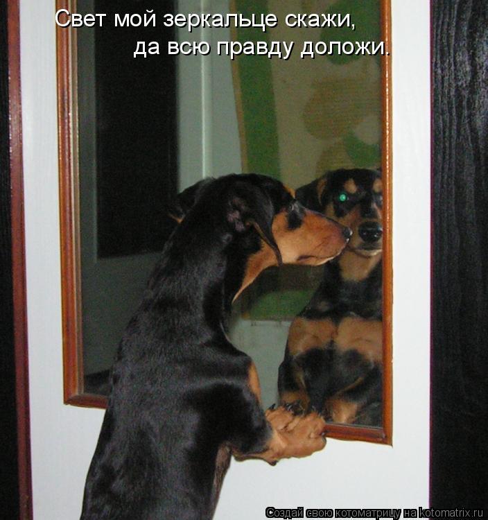 Котоматрица: Свет мой зеркальце скажи,  да всю правду доложи.