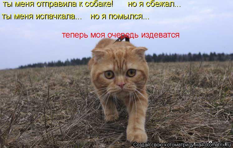 Котоматрица: ты меня отправила к собаке! но я сбежал... ты меня испачкала... но я помылся... теперь моя очередь издеватся
