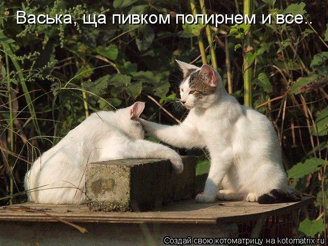 Котоматрица: Васька, ща пивком полирнем и все..