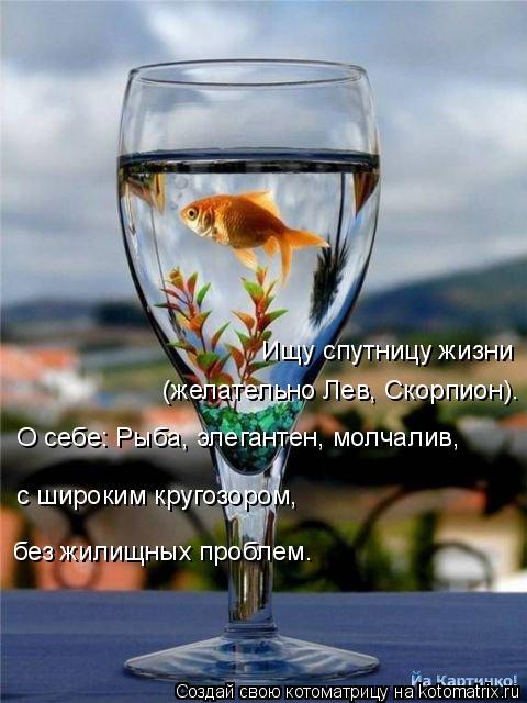 Котоматрица: Ищу спутницу жизни (желательно Лев, Скорпион). О себе: Рыба, элегантен, молчалив, с широким кругозором,  без жилищных проблем.