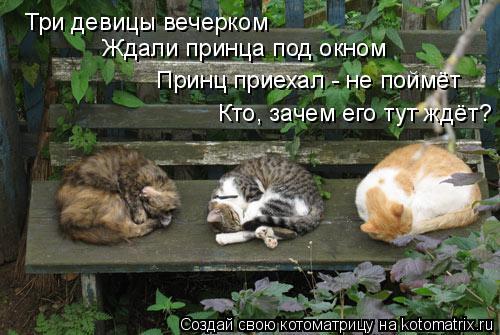 Котоматрица: Три девицы вечерком Ждали принца под окном Принц приехал - не поймёт Кто, зачем его тут ждёт?