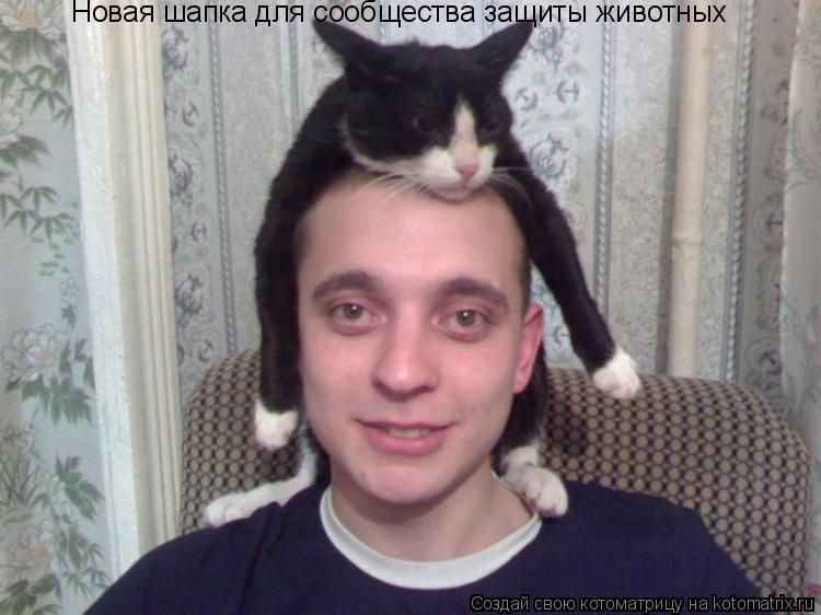 Котоматрица: Новая шапка для сообщества защиты животных