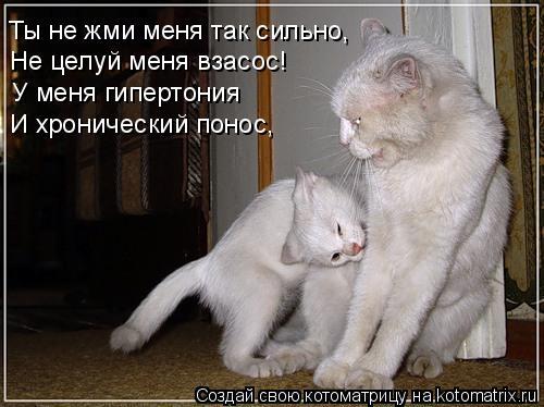 Котоматрица: Ты не жми меня так сильно, Не целуй меня взасос! У меня гипертония И хронический понос,