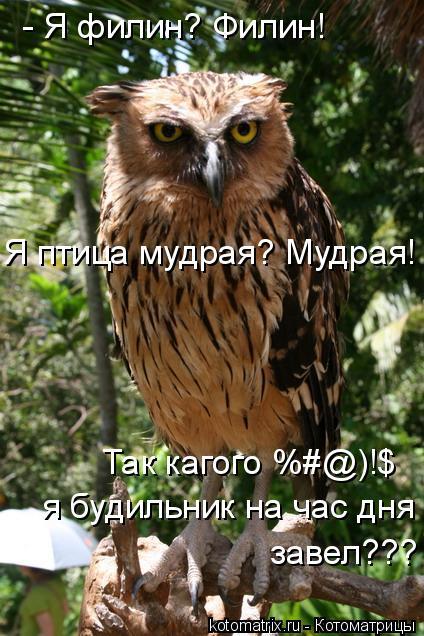 Котоматрица: - Я филин? Филин!  Я птица мудрая? Мудрая! Так кагого %#@)!$  я будильник на час дня  завел???