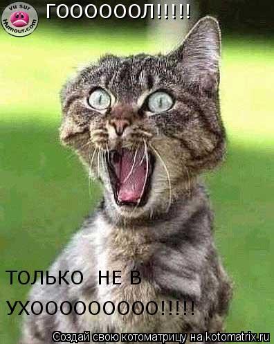 Котоматрица: ГООООООЛ!!!!! ТОЛЬКО  НЕ В   УХООООООООО!!!!!