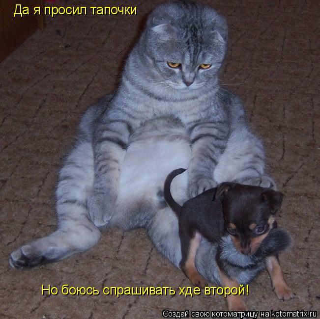 Котоматрица: Да я просил тапочки  Но боюсь спрашивать хде второй!