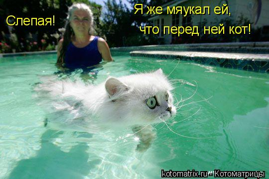Котоматрица: Слепая! Я же мяукал ей, что перед ней кот!
