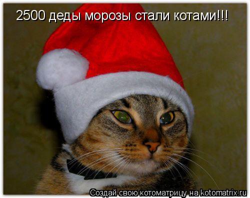 Котоматрица: 2500 деды морозы стали котами!!!