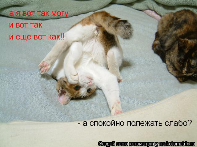 Котоматрица: а я вот так могу и вот так и еще вот как!! - а спокойно полежать слабо?
