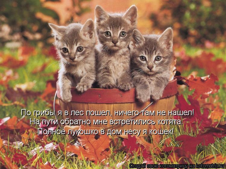 Котоматрица: По грибы я в лес пошел, ничего там не нашел! На пути обратно мне встретились котята. Полное лукошко в дом несу я кошек!
