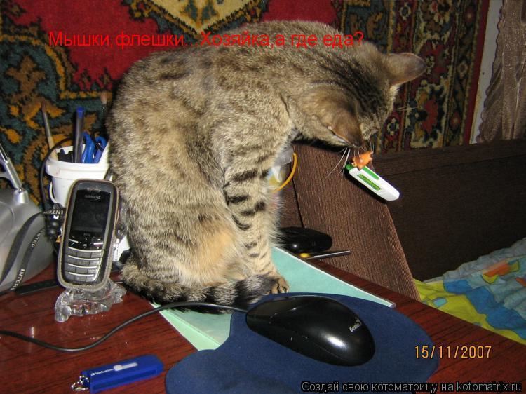 Котоматрица: Мышки,флешки...Хозяйка,а где еда?