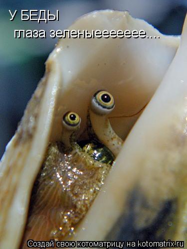 Котоматрица: У БЕДЫ глаза зеленыеееееее....