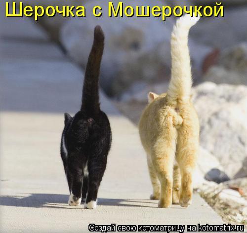 Котоматрица: Шерочка с Мошерочкой