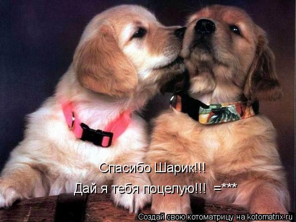 Котоматрица: Спасибо Шарик!!! Дай я тебя поцелую!!!  =***