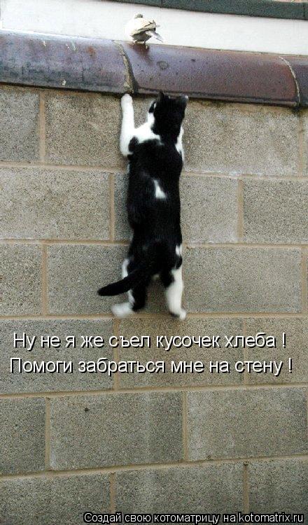 Котоматрица: Ну не я же съел кусочек хлеба ! Помоги забраться мне на стену !
