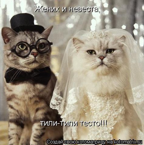 Котоматрица: Жених и невеста, тили-тили тесто!!!